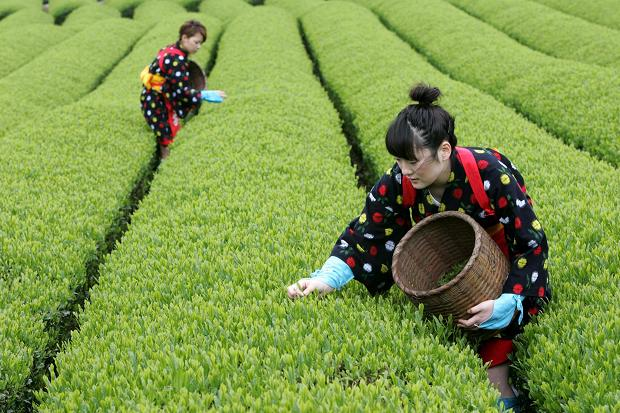 tè giapponesi