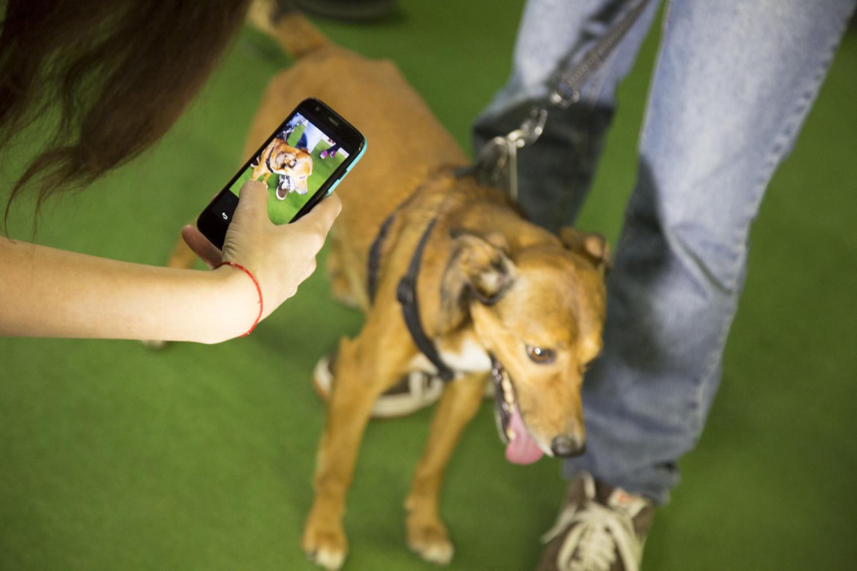 app-lifestyle-Royal-Canin